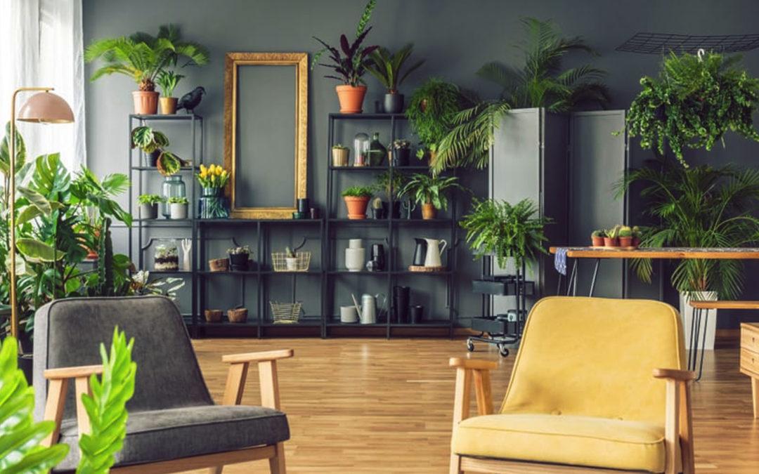 Benefícios da vegetação em ambientes internos