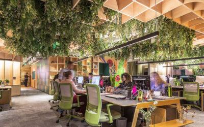 Design biofílico: como usar em projetos arquitetônicos